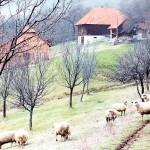 Rodna kuća Ljubivoja Ršumovića